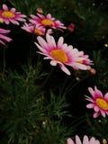 A terra ri nas flores Fotos de Stock Royalty Free