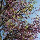 A terra ri nas flores foto de stock