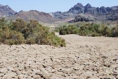 A terra seca Fotografia de Stock