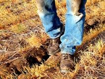 Terra seca, ano áspero Fotos de Stock Royalty Free