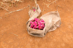 Terra seca com grupo de flores Fotografia de Stock Royalty Free