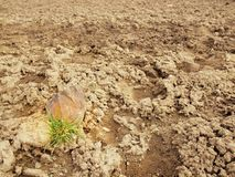 Terra seca de argila rachada com o topete da grama. Foto de Stock Royalty Free
