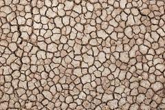 Terra seca e rachada da estrada, deserto de Amboseli (aka lago Amboseli) em Kenya Fotos de Stock