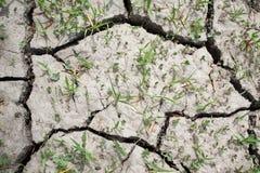 Terra seca rachada e Parched na seca Imagens de Stock