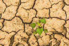 Terra seca rachada e uma planta só verde que quebre através da quebra Fotografia de Stock