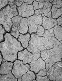 A terra seca seja árida Imagens de Stock Royalty Free