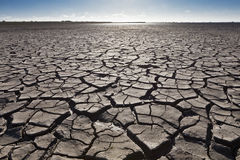 Terra secada Imagens de Stock