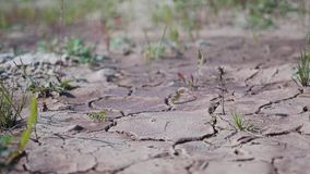 A terra secada e as plantas pequenas fazem sua maneira através do rim video estoque