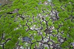 Terra secada na terra Fotos de Stock