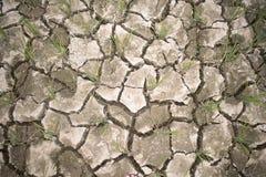 Terra secca Cracked di un giacimento del riso immagine stock libera da diritti