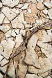 Terra seccata Fotografia Stock
