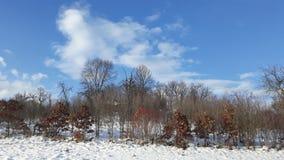 Terra soleggiata della neve del paesaggio Fotografia Stock