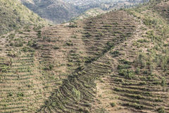 Terra Terraced em Etiópia oriental Fotos de Stock