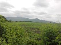A terra verde Fotografia de Stock Royalty Free