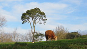 Terra verde da beleza Fotografia de Stock Royalty Free