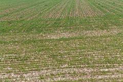 Terra verde dell'aratro che prepara terreno al raccolto Fotografia Stock
