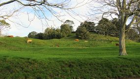 Terra verde di bellezza Fotografie Stock