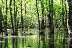 Terra verde do pântano Imagem de Stock