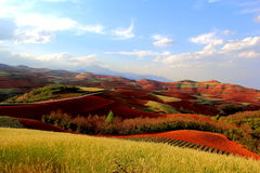 Terra vermelha Foto de Stock Royalty Free