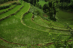 Terrace 1. Terrace locates in west of sichuan province, China stock photos