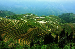 Terrace. China Guangxi terraced landscape. Every year, many tourists go to enjoy travel Royalty Free Stock Images