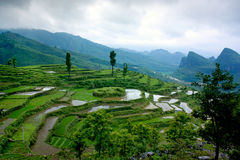 Terrace. Guangdong, south China, with terraced landscape Stock Image