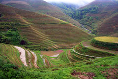 Terrace. In longsheng,guilin, china royalty free stock photos