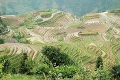 Terrace. Famous terrace in longsheng, Guilin, China Stock Photo