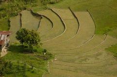 Terrace agriculture. Sumatra, Indonesia Stock Image