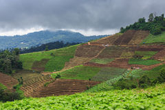 Terrace agriculture on tropical mountain Royalty Free Stock Photography