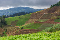 Terrace agriculture on tropical mountain Royalty Free Stock Image