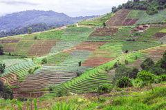 Terrace agriculture on tropical mountain, Chiang Mai, Thailand Stock Photos