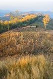Terrace corn fields in thailand. Hut in corn farm field on mountain Stock Photo