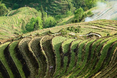 Terrace cultivation Stock Image