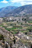 Terrace farming in the canyon of the Colca River in southern Peru Royalty Free Stock Photos