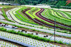 Terrace Farming Royalty Free Stock Images