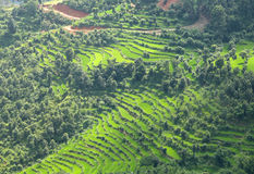 Terrace farming in Pokhara Valley Stock Photo