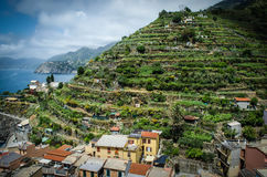 Terrace Farms Tower Above Manarola. Manarola is one of the beautiful towns of the Cinque Terre, a land where seafood rules and grapevines climb the hills. Italy stock photo