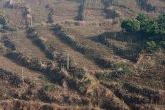 Terrace field Royalty Free Stock Image