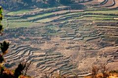 Terrace field Stock Image