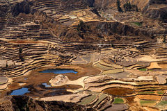 Terrace fields in the Canyon Colca  Royalty Free Stock Image