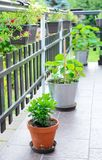 Terrace with flowers Stock Photography