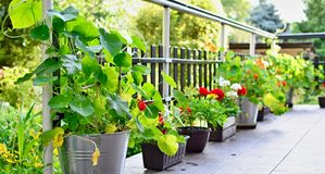 Terrace with flowers Royalty Free Stock Photo