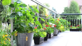 Terrace with flowers stock footage
