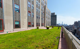 Terrace with green grass of Shutterstock offices. Stock Photos