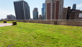 Terrace with green grass of Shutterstock offices. Stock Photo