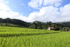 Terrace green rice fields of farming season Royalty Free Stock Photography