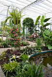 Terrace. In greenhouse in a Botanical Garden Stock Photo