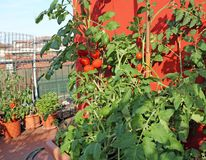 Terrace of a house with vegetable garden Royalty Free Stock Photography