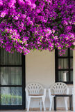 Terrace overgrown with flowers Royalty Free Stock Images